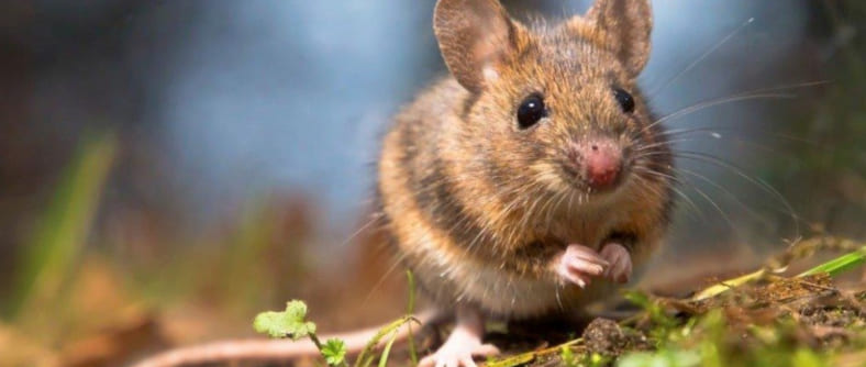 К чему снятся мыши (и летучие тоже) — толкования сна по различным сонникам